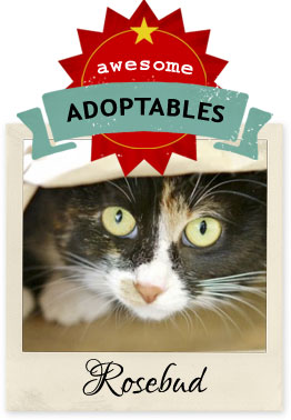 awesome adoptables