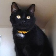 Indy profile