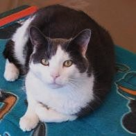 frenchie 3